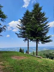 Obraz krajobraz przez samotne drzewa - fototapety do salonu