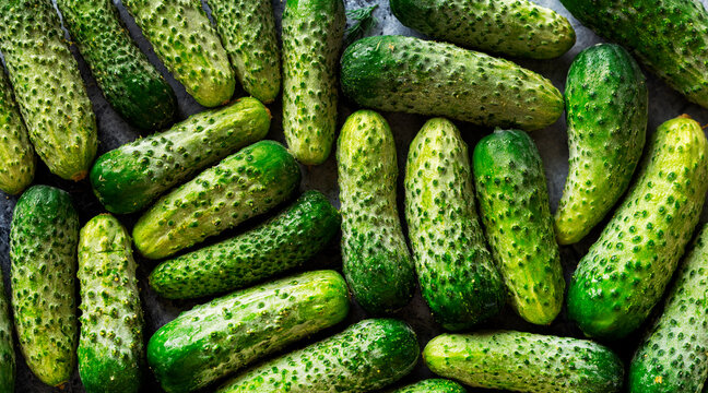 small fresh cucumbers in green color vegetable bacground