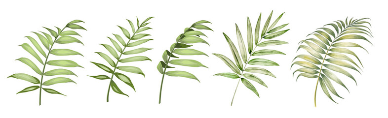 Fototapeta Set of differents palm leaves on white background. Watercolor, line art, outline illustration. obraz