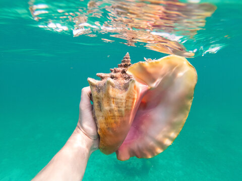 Hand of snorkeling man holding huge conch shell underwater. Concept of travel, vocation and adventure