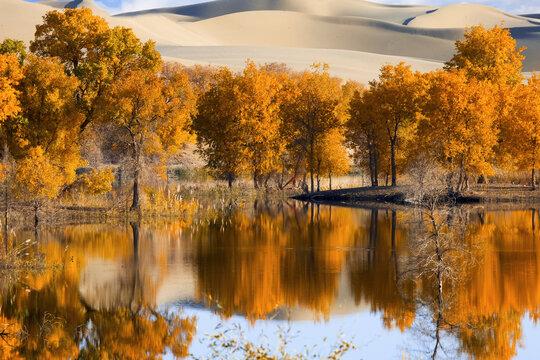The taklamakan desert in xinjiang in iminqak scenery