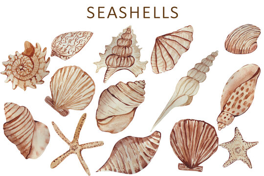 collection of seashells watercolor