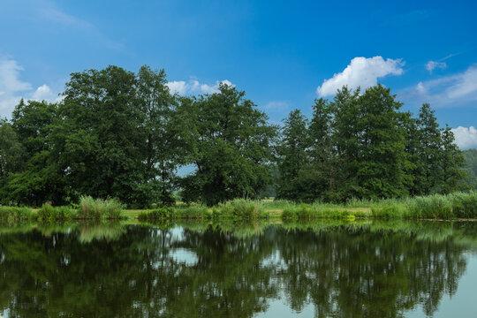 Natur pur am Elbe-Lübeck-Kanal mit Spiegelung der Pflanzen im Wasser