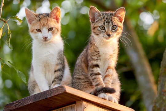 Portrait of two kittens sitting on a birdhouse. Cats in the garden. Little kittens lit by the setting sun. Staring cat.