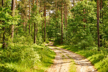 Obraz summer forest road,path, forest path - fototapety do salonu