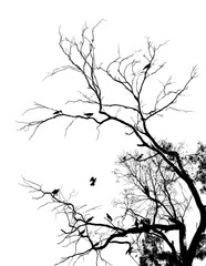 dark silhouettes of birds sitting on bare tree branches isolated on white background, close view