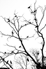 branches silhouette isolated