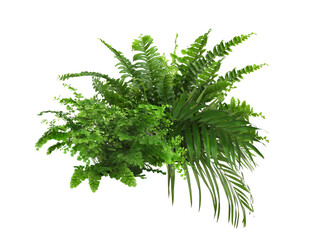 Beautiful composition with fern and other tropical leaves on white background.