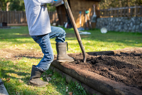 Young boy digs in his garden in a back yard.