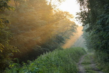 Obraz Świt w lesie - fototapety do salonu