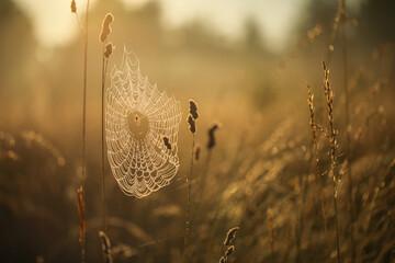 Obraz Sieć pajęcza - fototapety do salonu