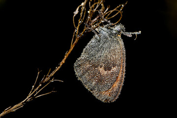 Obraz Motyl o poranku - fototapety do salonu