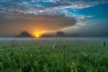 Obraz Na łące o wschodzie słońca - fototapety do salonu