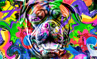 abstract colored dog muzzle isolated on colorful background