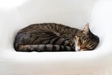 Obraz Śpiący kot - fototapety do salonu
