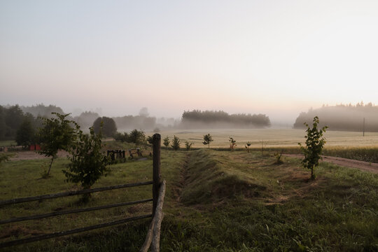 atmospheric misty meadow field and summer landscape at sunrise
