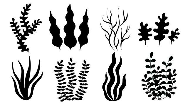 set of algae, black silt. simple vector