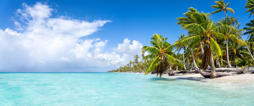 Tropical beach panorama with turquoise water and palm trees