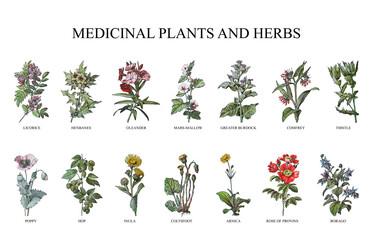 Fototapeta Medicinal plants and herbs collection - vintage illustration from Larousse du xxe siècle obraz