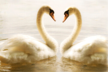 two swans on the lake