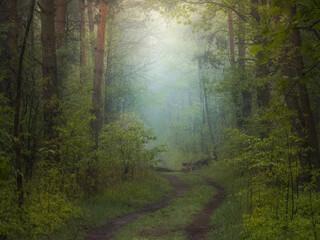 Obraz Mgła w wiosennym lesie - fototapety do salonu