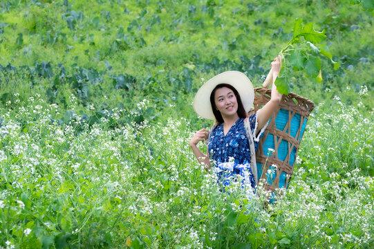 A Young farmer is happily picking organic radish fresh in garden. Organic farming.