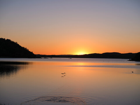 Birds causing ripples in the water after taking off into beautiful sunset. Shot in Sweden, Scandinavia