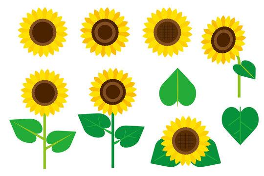 ヒマワリの花の素材セット/白背景