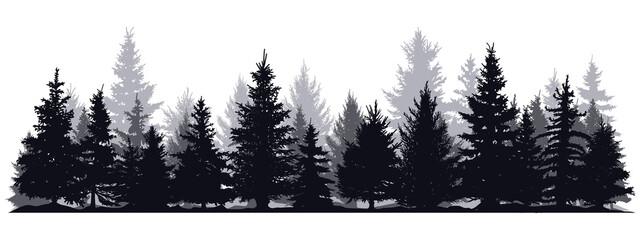 Fototapeta Pine trees silhouettes. Evergreen coniferous forest silhouette, nature spruce tree park view vector illustration. Coniferous woods silhouette obraz