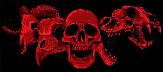 Obraz vector illustratio of animal skull art design - fototapety do salonu