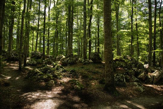 Waldidylle mit wanderweg.