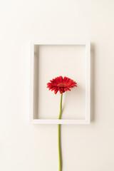 red gerbera flower in a white frame