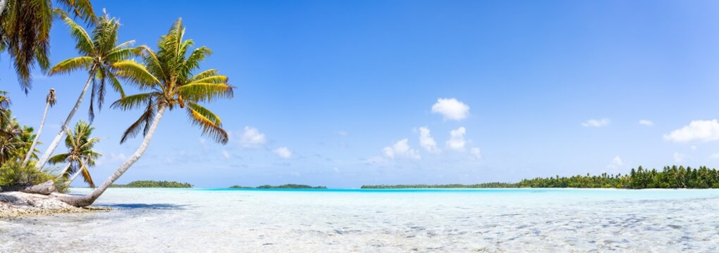 Tropical beach panorama with palm tree and turquoise sea