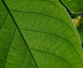 closeup photo of plant leaf veins