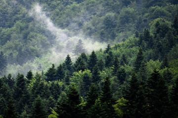 Obraz Mgła w górach między drzewami - fototapety do salonu
