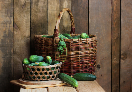 still life with fresh green cucumbers in a basket.