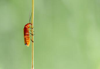 Obraz czerwony robak na zielonym tle - fototapety do salonu