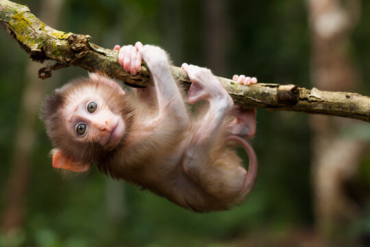Cute monkeys and where they life in nature
