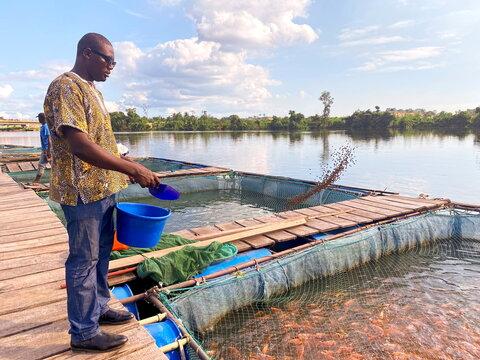 Boris Youdom Kamgo, 32, feeds fish he is breeding at fish farming pond on the Dibamba river, near Douala,