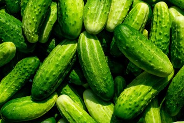 Obraz Fresh Cucumbers - fototapety do salonu