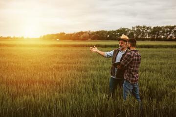 Fototapeta farmers talking on wheat field obraz
