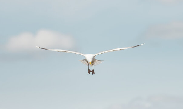 beautiful seagull soars in the blue sky