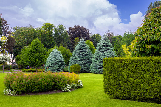 landscaping of a park with a garden bed and deciduous trees with leaves and pine needles on a green lawn, evergreen and seasonal plants in the backyard.
