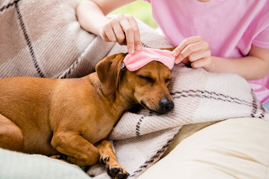 Photo of funny cute brown dog wear pink sleeping mask lying checkered blanket indoors house home room