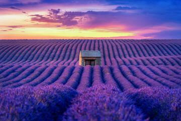 Beautiful lavender field at sunset.