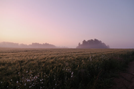 picturesque field and scenic countryside landscape at sunrise in summer