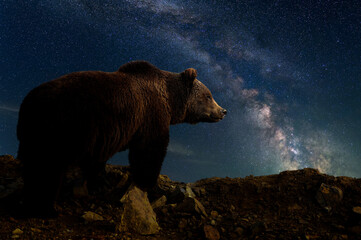 Beautiful night landscape with bear and the Milky Way galaxy
