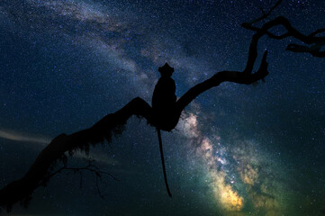 Beautiful night landscape with monkey and the Milky Way galaxy