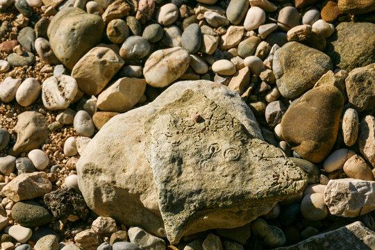 Muschelabdrücke und Fadenwürmer als Abdruck im Stein am Strand (focus middle)