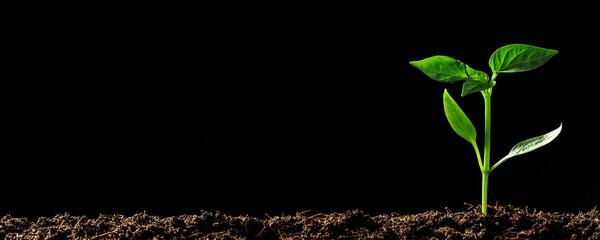 Fototapeta Green seedling growing on the ground in the rain obraz